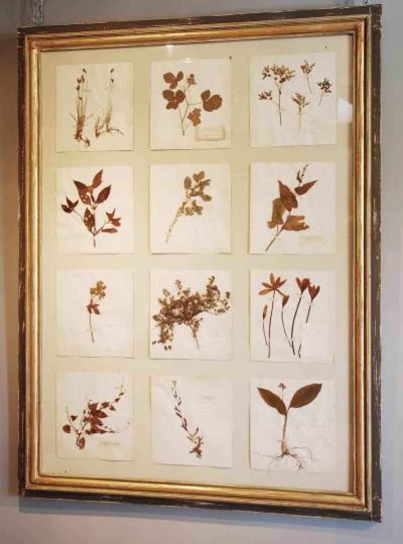 Pair Of Large Framed Pressed Herbs