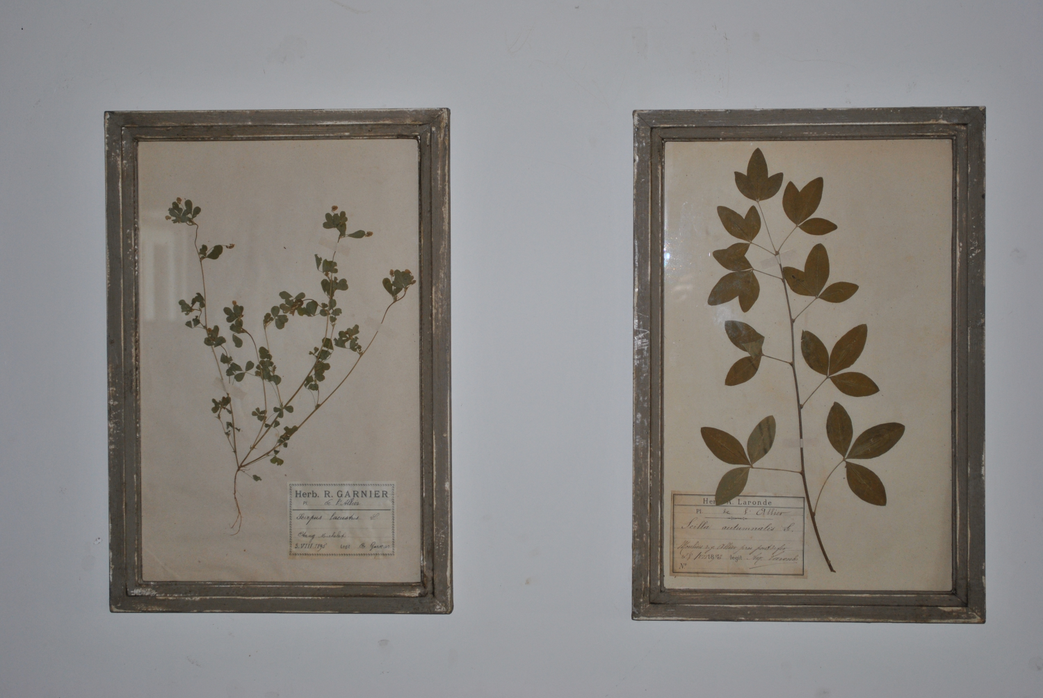 French Framed Herbs