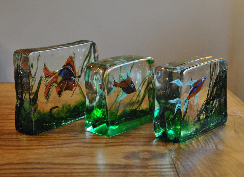 Glass Aquariums